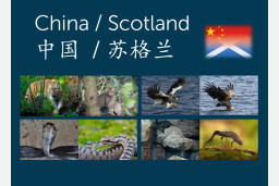 China/Scotland Pack
