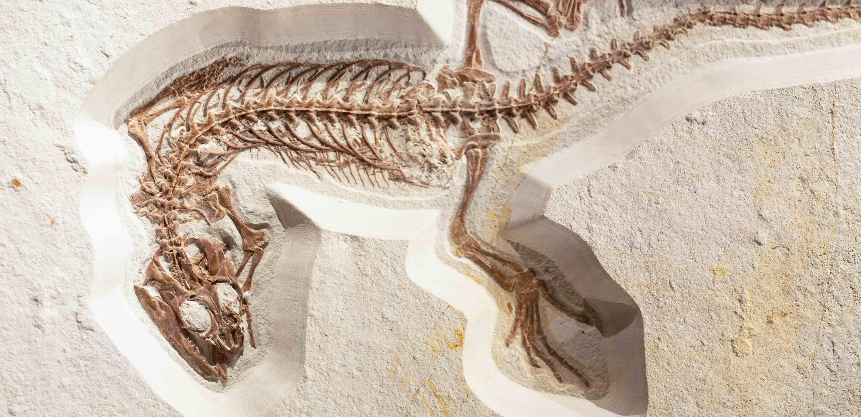 Fossil Photo by Markus Spiske on Unsplash