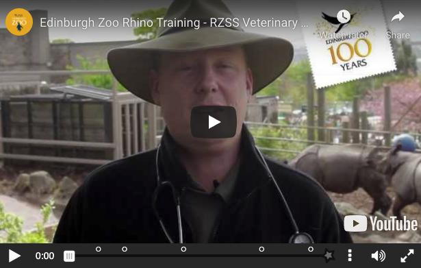 Edinburgh zoo rhino training video still