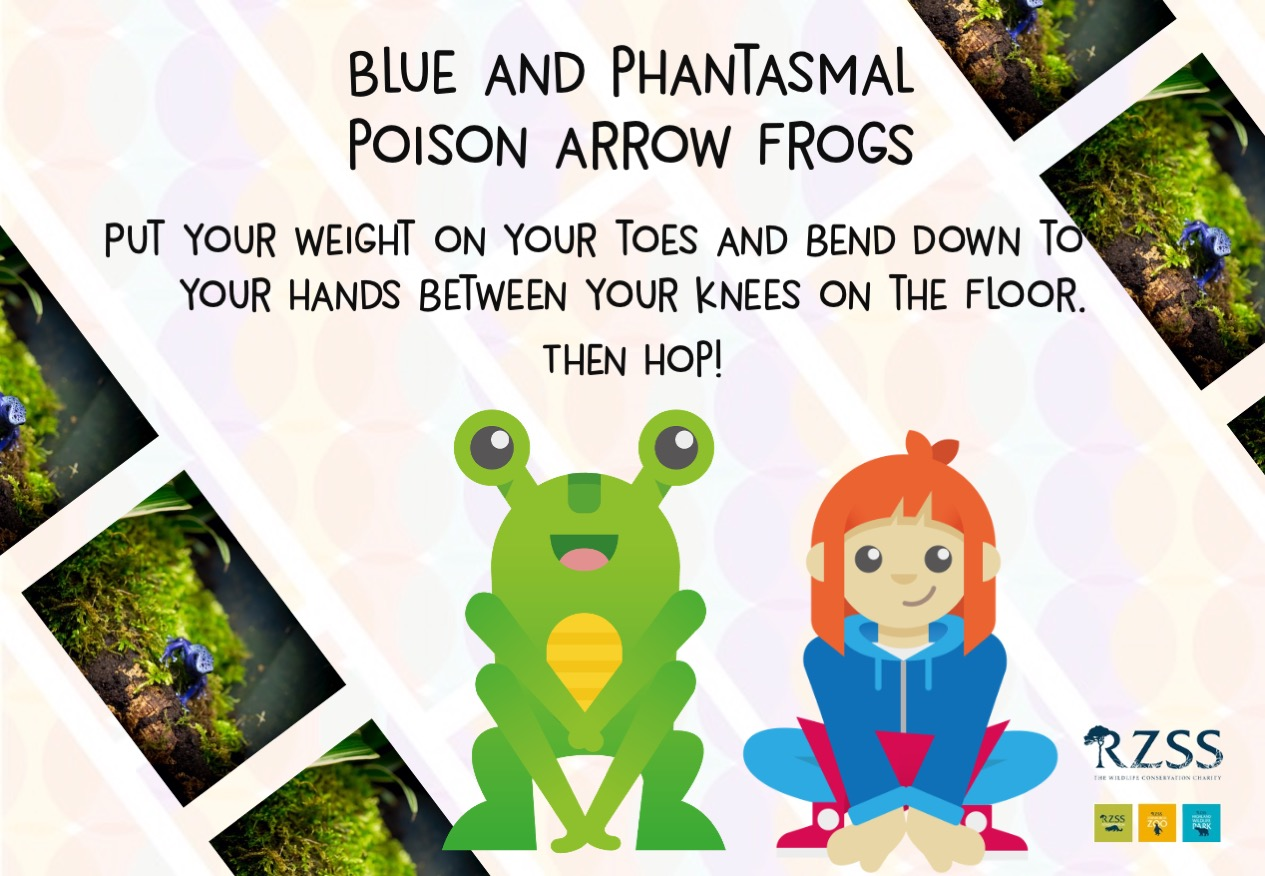 Hop like a frog by putting your weight on your toes and bending down to your hands between your knees on the floor