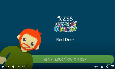 Red deer video front page