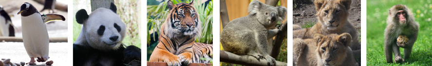 penguin, panda, tiger, koala, two lion cubs and a snow monkey