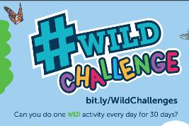 Wild challenge logo in bright colours