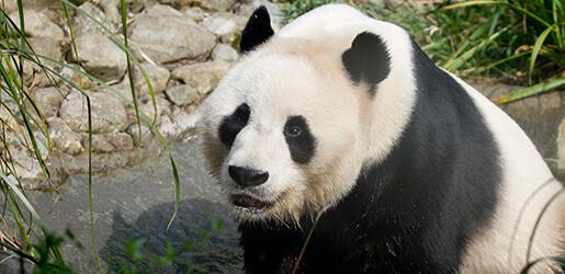 Pondering Pandas